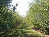 orchard0710110036.JPG