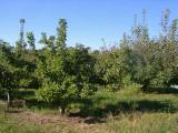 orchard0710110038.JPG