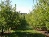 orchard0710110046.JPG