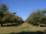 orchard0710110049.JPG