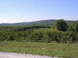 orchard0710120002.JPG