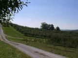 orchard0710120003.JPG