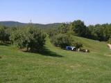 orchard0710120007.JPG