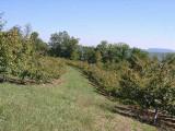 orchard0710120009.JPG