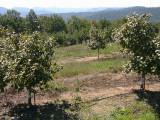 orchard0710120010.JPG
