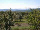 orchard0710120012.JPG