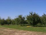 orchard0710120013.JPG