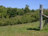 orchard0710120020.JPG