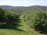 orchard0710120022.JPG