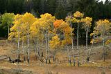 Fall foliage - Blacktail Plateau Drive