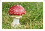 Fungi 1.jpg