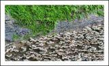 Fungi 2.jpg