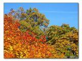 Herbstlaub / autumn foliage