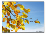 autumnal / herbstlich