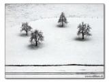 first snow / erster Schnee