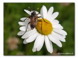 springtime ;-))       /      Frühling ;-))