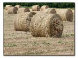 Heuballen / round hay bales