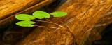 CLICK ON PICTURE TO CONTINUE / CLIQUEZ SUR LA PHOTO POUR CONTINUER