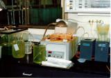 Brine shrimp culture for herring food.jpg