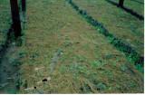 7 Ngoli nursery