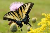 Tennessee area wildflowers