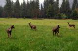 Deer_4.jpg