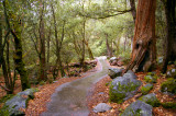 Yosemite_Falls_Trail.jpg