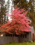 Tree_Bloom.jpg