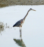 Birds of the East Bay trail