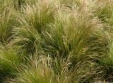 ? Grass 0673