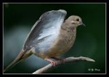 6-3-07-Bird-003bf.jpg
