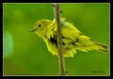 6-9-07-Bird-040.jpg