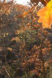 Arkansas Foliage