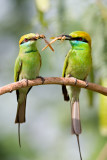 okhla_new_delhi