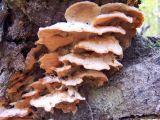 stack of lichen