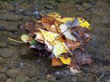 leaf pile up
