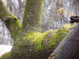 mossy tree over water