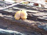 found on a log