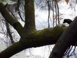 fallen tree over water