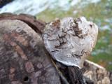 sweet fungi face