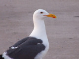sidewalk visitor