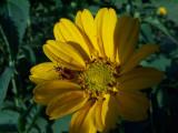 flower & unknown bug