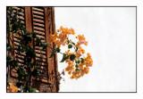 Bougainvillaea - PICT0053.jpg