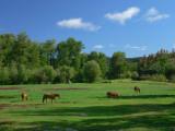Kleena Kleene horses
