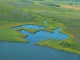 Wetlands on Johnny's Lake