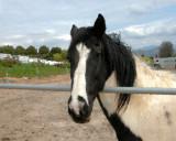 Fallbrook horse