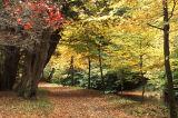 Riverside Autumn