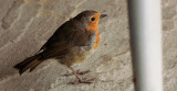 Robin in Coffee Shop