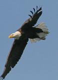 Eagles - 2006-07 Season