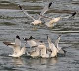 Gull Like Gallery